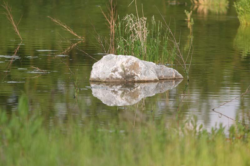 ...großer Stein im kleinen Teich.