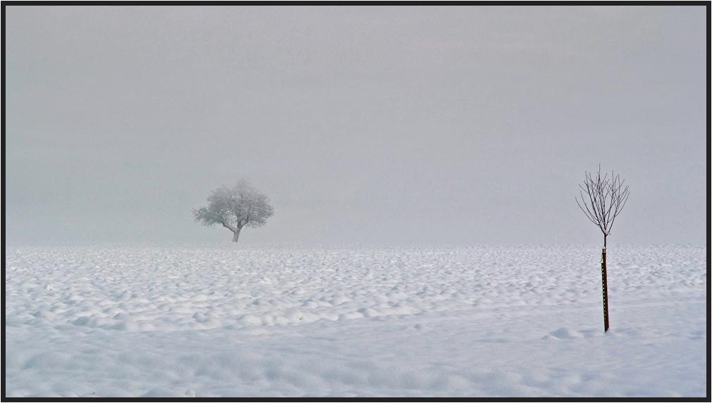 Grosser und kleiner Baum