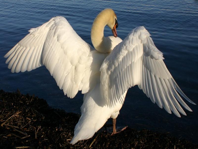 großer weißer Vogel