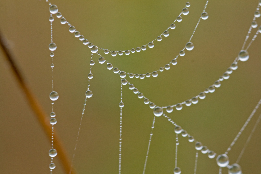 grosses perles !!