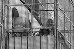 Großmutter hinter Gittern s/w