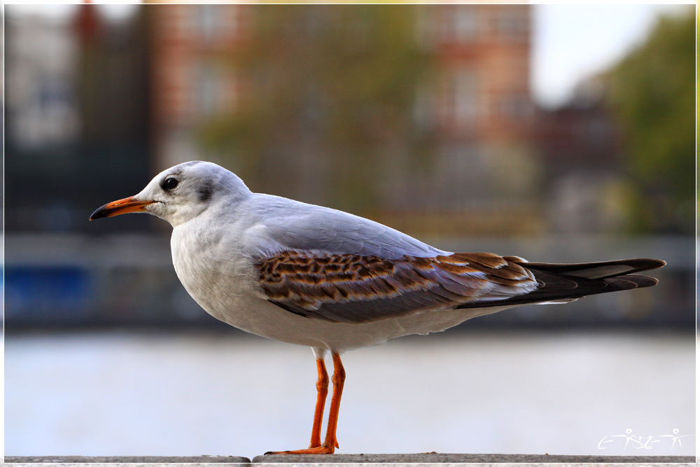 Großstadtvogel