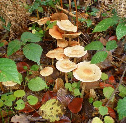 groupe de champignons blancs