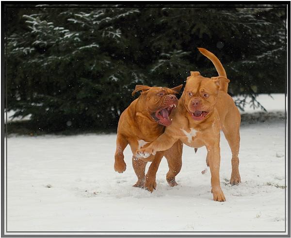 Grrrr mein schnnee