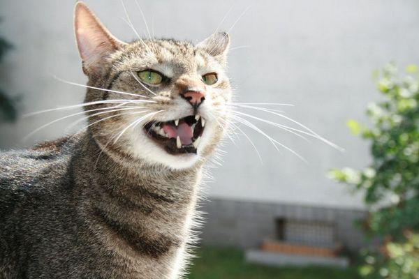Grrrrrrr.....!