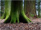 grün...........