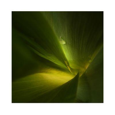 _grün 2_