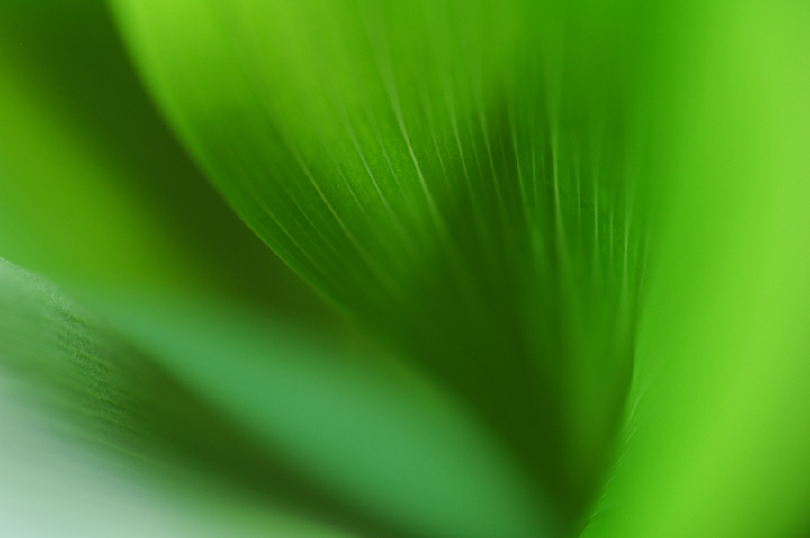 _grün 3_