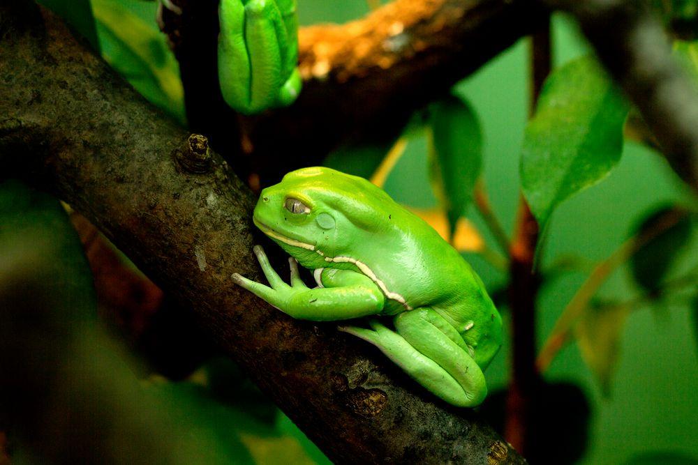 Grün von Nico Battiston