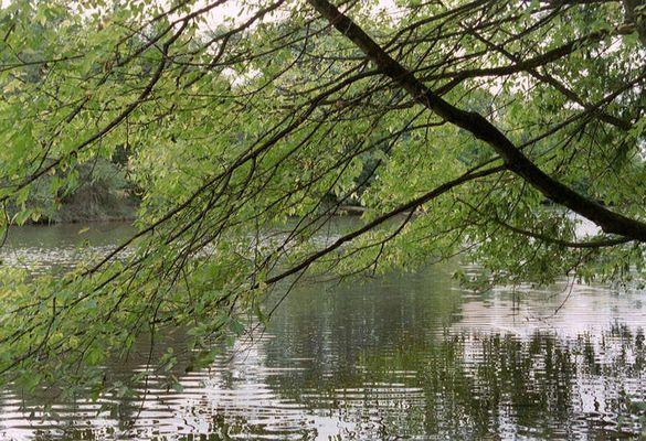 Grün am Wasser