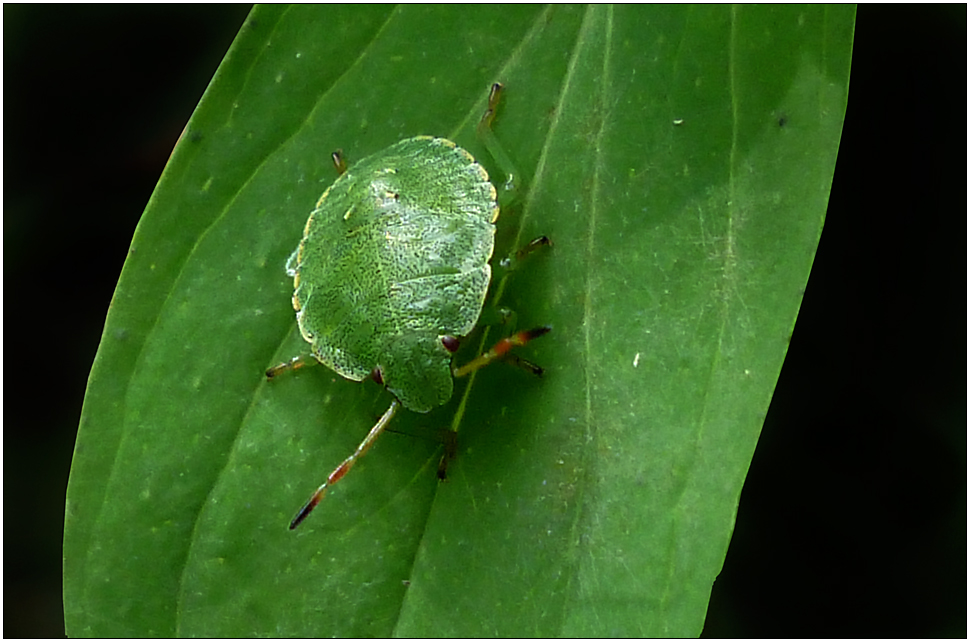 Grün auf Grün...mit schnellen Beinchen...