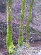 Grün auf Lila (Original)