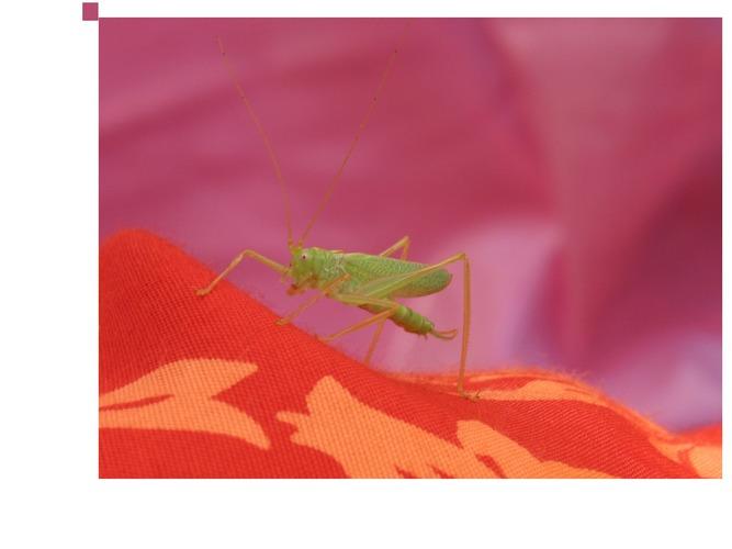 Grün auf Rot