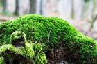 Grün bewachsen...