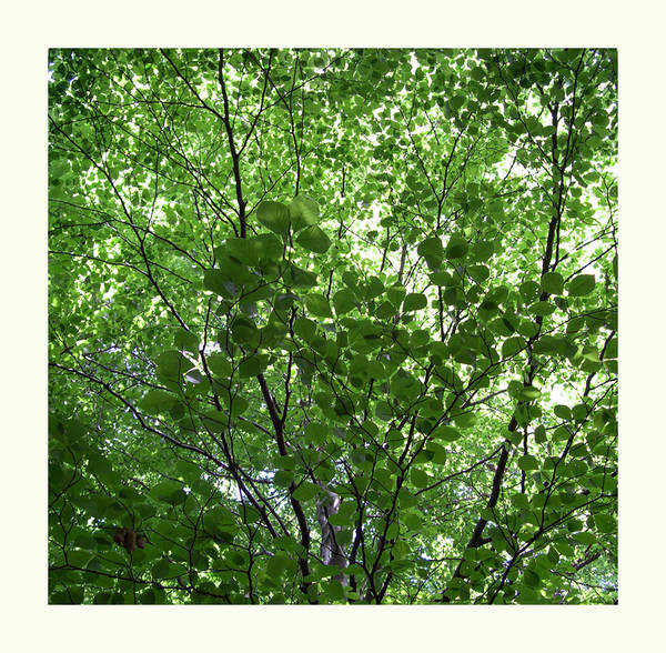 ... grün ...