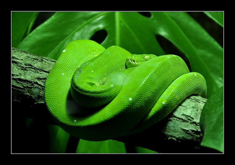 Grün...