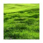 Grün, die Farbe von Neubeginn und Wachstum