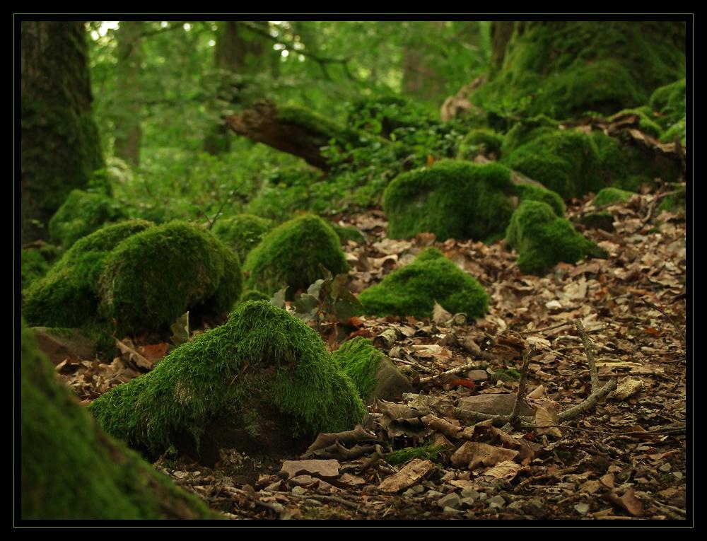 Grün - Farbe der Hoffnung II ...