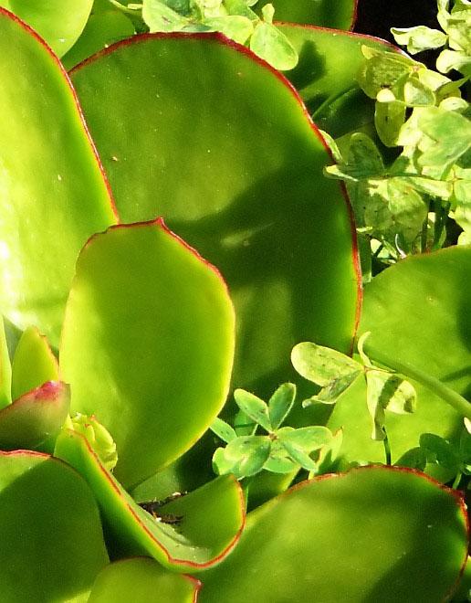 grün, fett und bringt Glück....?