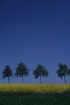 Grün-Gelb-Blau