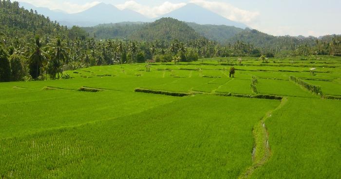 ... grün, grün, grün auf Bali