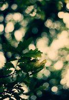 grün grün grün sind alle meine...