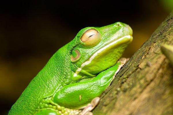 Grün, grün, grün sind alle meine...