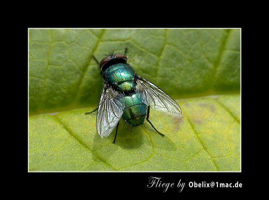 ...grün...   Hulk?? oder doch nur ne Fliege?