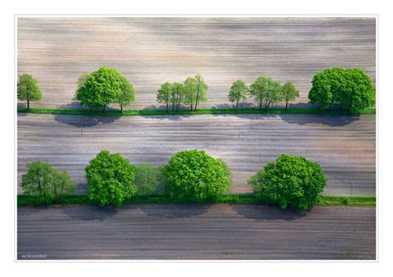 Grün im Feld
