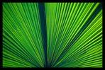 Grün im Gegenlicht [1]