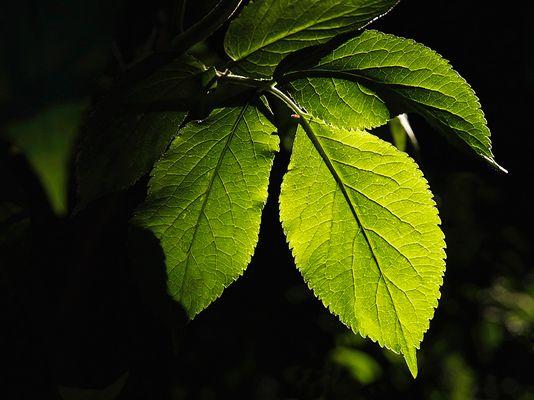 *** Grün ist die Farbe der Hoffnung ***