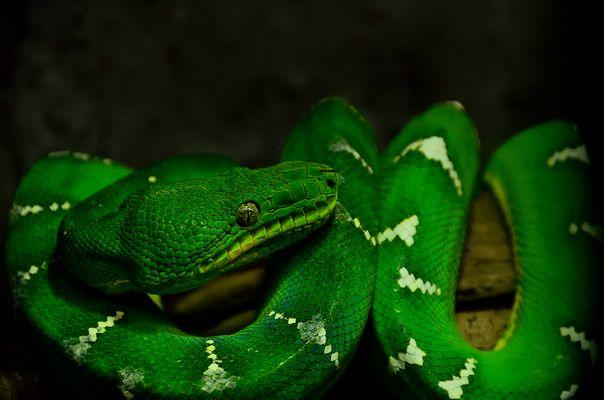 Grün ist nicht immer nur Gift !