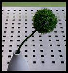 grün kariert