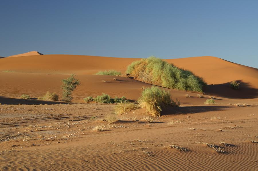 Grün mitten in der Wüste 2