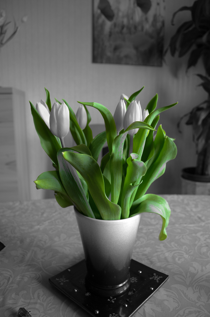 Grün-monochrome Tulpen