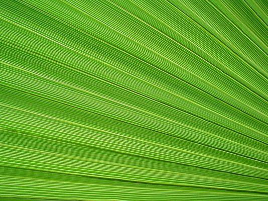 Grün oder grün?