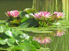 Grün-rosa Spiegelung