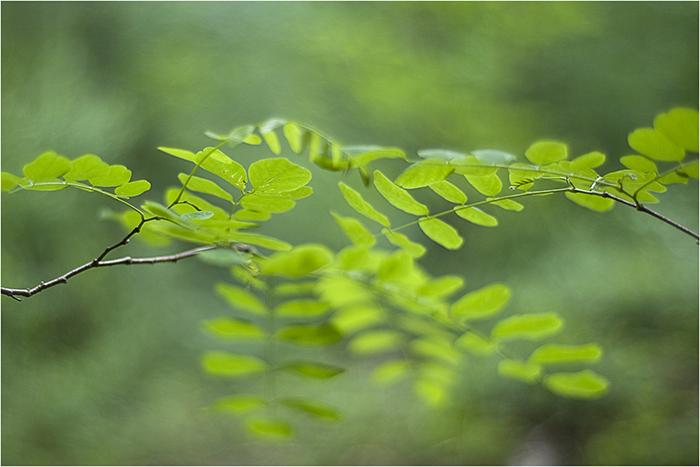 grün-ton-serie°°