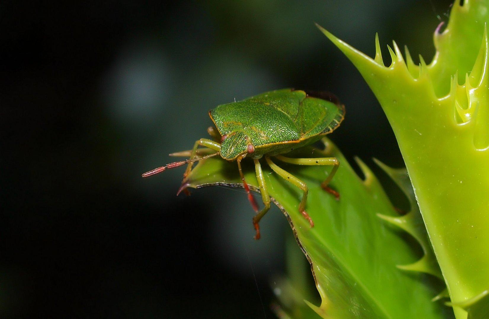 Grün und freundlich...