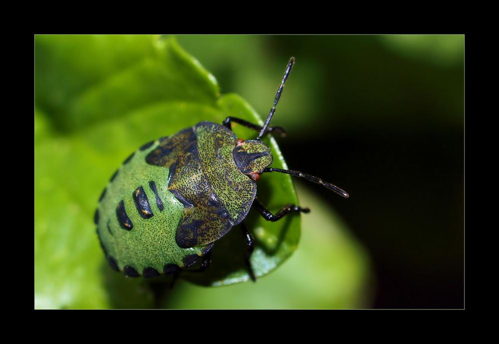 Grün und klein heißt nicht immer nett .....