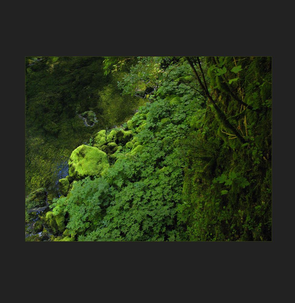 grün und kühl