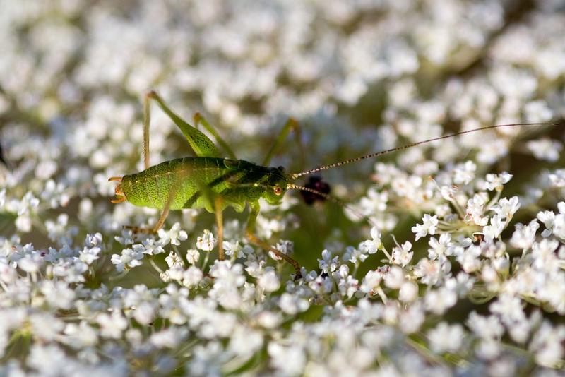 Grün und weiß