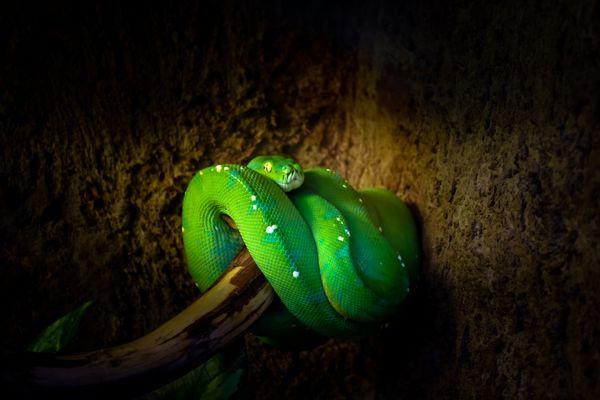 grün vor Neid