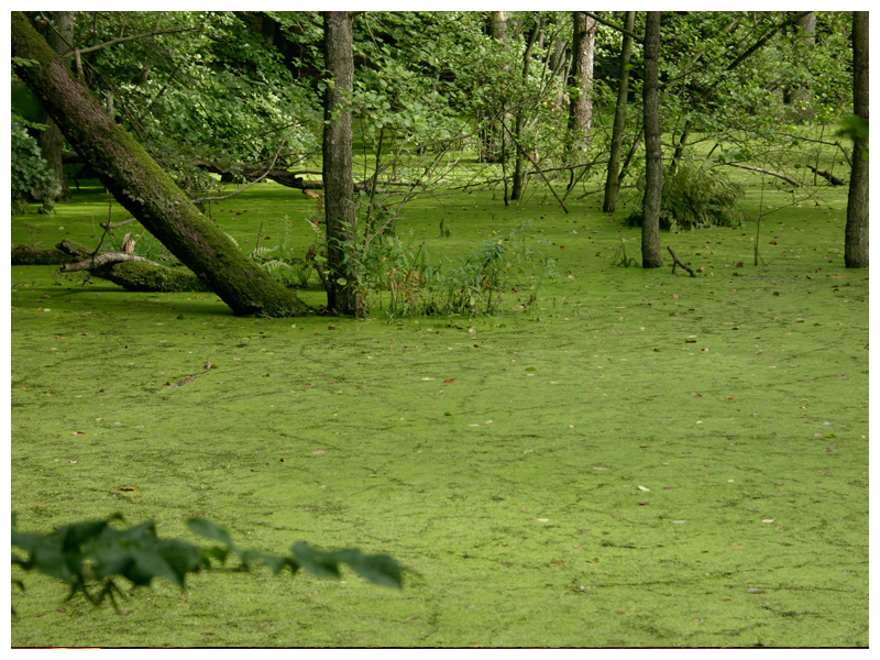 ... grün vor Neid