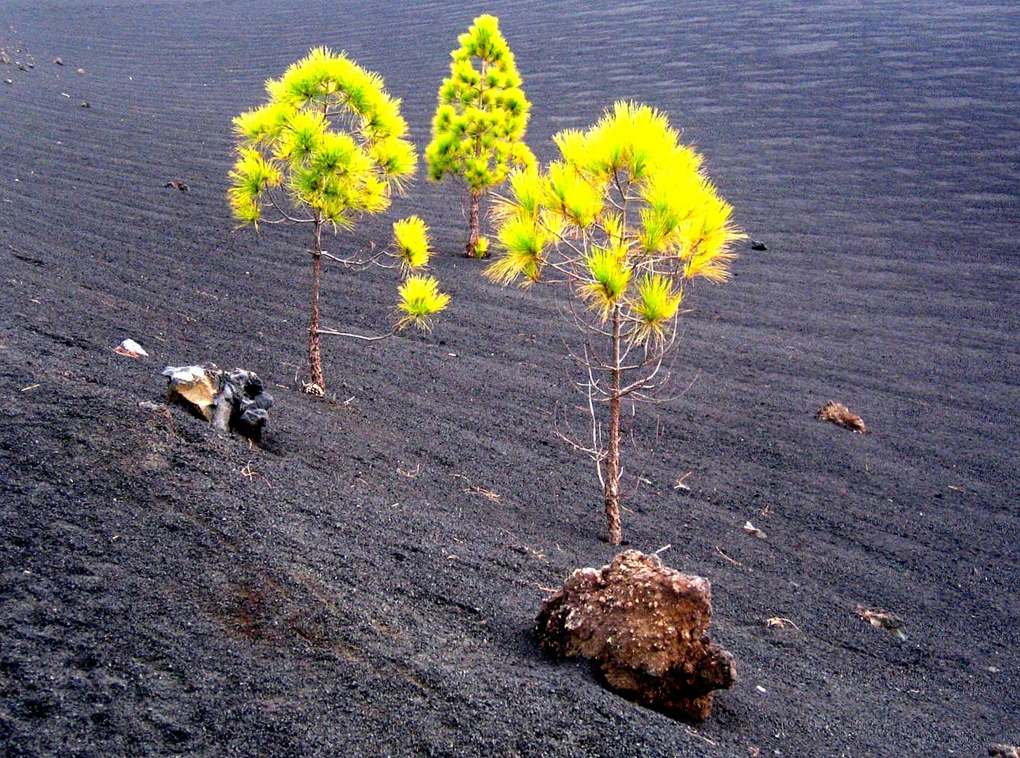 Grün vor Schwarz nach der Eruption