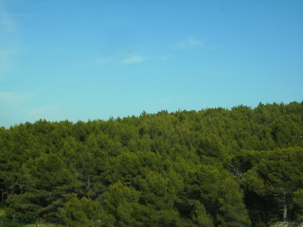Grün zu Blau