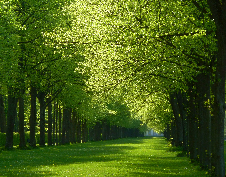 Grüne Allee