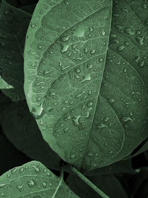 Grüne Blätter im Frühsommer