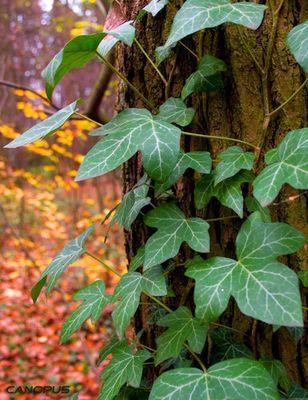 Grüne Blätter im Herbst