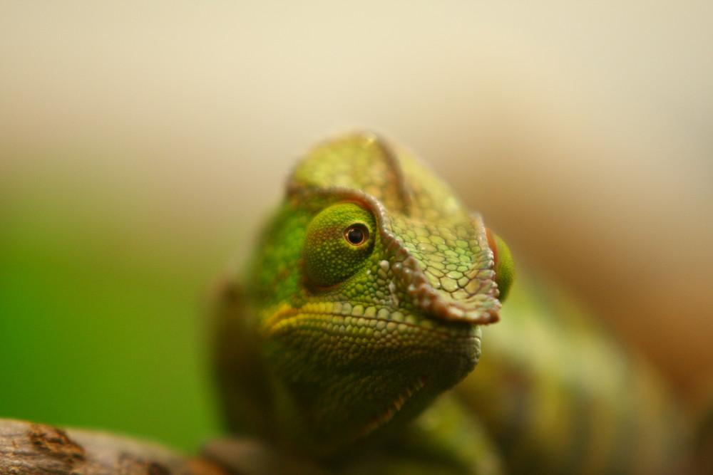 Grüne Eleganz